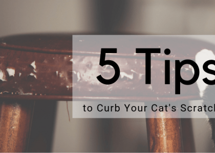 5 Tips to Curb Your Cat's Scratching