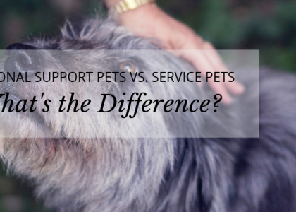 Emotional Support Pets vs. Service Pets: What's the Difference?