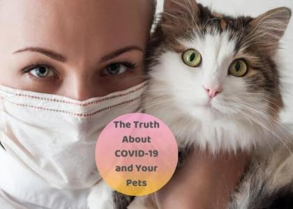 the truth about COVID-19 and your pets